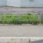 image (31)